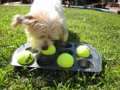 5 DIY Dog Toys Your Pups Will Love | DogVacay Official Blog
