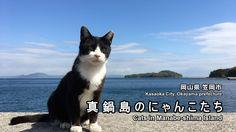 真鍋島の猫と海と青い空