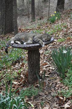 birdbath on stump (and kitty)