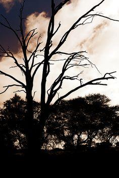 Silhouette nature photo taken of trees on a farm. #tree #background #nature #silhouette #sky #clouds #dark #wallpaper #farm #landscape #portrait #night #photography #landscape photography