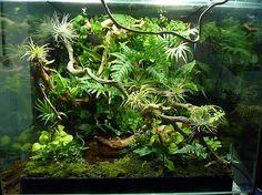 Vivarium - My site Reptile Habitat, Reptile House, Reptile Room, Reptile Cage, Reptile Enclosure, Gecko Terrarium, Aquarium Terrarium, Gecko Vivarium, Terrarium Diy