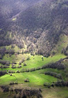جنگلهای نیق ( Forest Niyag ), Ahar, East Azerbaijan, Iran by alishokri