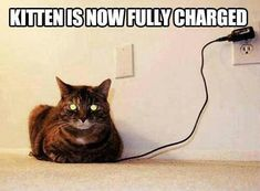 #catsfunnylaughingsohard