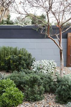 Seek this significant graphics in order to find out today facts and techniques on Waterwise Landscaping Australian Garden Design, Australian Native Garden, Bush Garden, Dry Garden, Coastal Gardens, Landscaping Plants, Landscaping Ideas, Garden Styles, Garden Inspiration