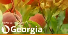 Georgia Homeschool Laws | HSLDA