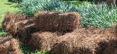 Straw Bales Pine Straw Landscaping, Wood Chip Mulch, Types Of Mulch, Rubber Mulch, Organic Mulch, Weed Seeds, Landscape Fabric, Garden Beds