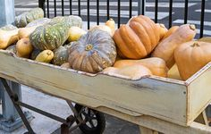 14 Unusual Pumpkins For Fall Decorating (And Eating, Too) - Welcome the season with these unusual varieties of pumpkins and gourds. - Welcome the season with these unusual varieties of pumpkins and gourds. Trendy Halloween, Fall Halloween, Pumpkin Varieties, Animal Quilts, Good Housekeeping, Autumn Garden, Nature Crafts, Pumpkins, Gourds
