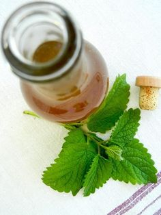 sirup z medovky a stevie Panna Cotta, Ale, Ethnic Recipes, Food, Syrup, Dulce De Leche, Meal, Ale Beer, Essen