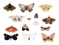 moth by becca stadtlander