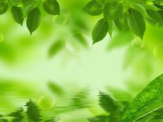 Leaf Background wallpaper | 1280x960 | #8387