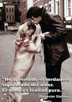 Tagged with cute, dog, aww, tribute, sylvester stallone; Shared by KoreanAmericanGunslinger. Sylvester Stallone Just Shared A Tribute To His Old Dog Jackie Stallone, Stallone Rocky, Rocky Sylvester Stallone, Rocky Balboa, Famous Dogs, Famous People, Dog Friends, Best Friends, Friends Forever