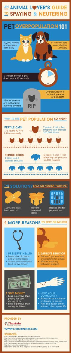 Spaying or neutering your pet is a 100% effective form of birth control that prevents unwanted litters and reduces shelter populations! Read about other benefits of spaying and neutering by viewing this infographic from a veterinarian in Dallas.