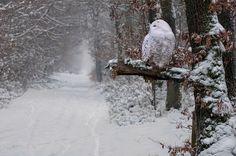 photographies de paysages d'hiver 25