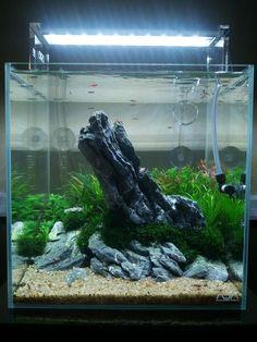 Seiryu Stone aquascape