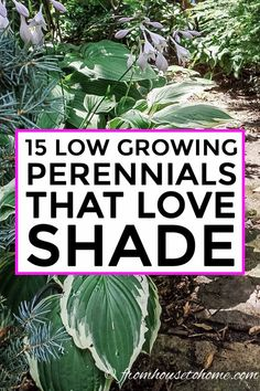 15 Stunning Perennial Ground Cover Plants That Thrive in the Shade - Gardening @ From House To Home These shade loving perennial ground cover plants are AWESOME! So many pretty flowers that will look great in my backyard shade garden. Backyard Trees, Backyard Shade, Dwarf Plants, Tall Plants, Flowering Plants, Part Shade Perennials, Perennial Flowers For Shade, Perennial Bushes, Perennial Gardens