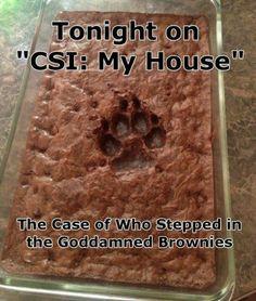 CSI brownies