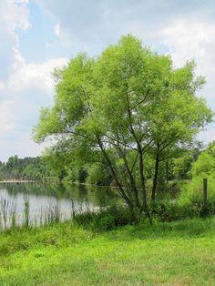 Summer Tree by Universal Pops, via Flickr