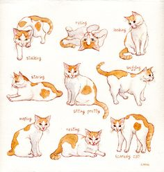 Cat chirping sound cat language and behaviour,cat mood chart cat watching tail,content cats how to do a cat eye. I Love Cats, Crazy Cats, Cute Cats, Warrior Cats, Animal Sketches, Animal Drawings, Cat Reference, Cat Sketch, Cat Pose