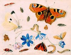 Butterflies, Caterpillars, Other Insects, and Flowers, Jan van Kessel, 1659
