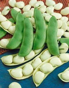 David's Garden Seeds Bean Lima Early Thorogreen (Green) 50 Non-GMO, Heirloom Seeds Lima, List Of Vegetables, Veggies, Regrow Vegetables, Growing Vegetables, Garden Plants Vegetable, Veggie Gardens, Bean Plant, Bean Seeds