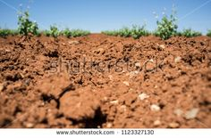 Unique red soil rich in clay and limey rock at Tierra de Barros wine-making region, Extremadura, Spain