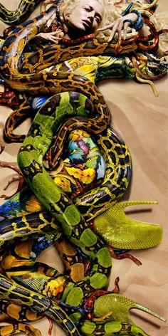 snake fashion photography http://webneel.com/daily | Design Inspiration http://webneel.com | Follow us www.pinterest.com/webneel