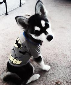 Its ACE! Though he's a little husky! I want one!!!
