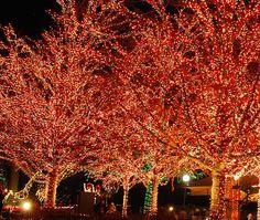 lights<3