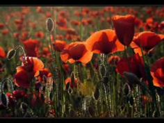 Music: Maurice Ravel - Bolero: Video by Gilaruna Flame from fiery red poppies to Ravel's passionate music. Beautiful Space, How Beautiful, Solo Music, Music Music, Orange Poppy, Natural Selection, California Poppy, Colorful Trees, Kinds Of Music