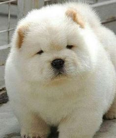 This puffy pouf ball looks like a polar bear.Share This on Facebook?Image via Earth Porm - Mom.me