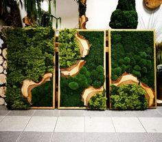 Green Mandalas – Stabilized Moss Stabilized Plants Christmas Decorations … # walled garden # Green To be … Moss Wall Art, Moss Art, Plant Wall, Plant Decor, Hanging Plants, Indoor Plants, Garden Art, Garden Design, Garden Ideas
