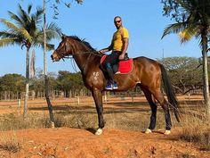 Shikhar Dhawan viral photo: Gabbar is back Shikhar Dhawan share a photo to announce his comeback - Kultejas News Shikhar Dhawan, Cricket News, News Today, Will Smith, Night Time, New Zealand, Comebacks, Horses, Indian
