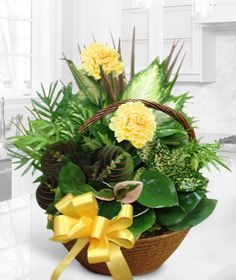 Sunny Garden-This sunny basket garden will brighten the home, hospital, or office.