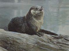 Robert Bateman Otter Study