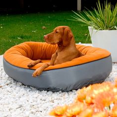 Outdoor dog bed for the summer