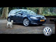 Dieser Hund steht anscheinend auf das Imitieren des VW Golf 7 seines Herrchens!