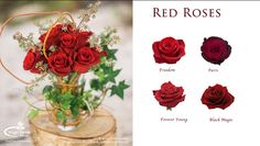 Popular Ecuadorian red rose varieties are Freedom, Paris, Forever Young and Black Magic. Rose Varieties, Young Black, Forever Young, Black Magic, Farms, Red Roses, Florals, Glass Vase, Freedom