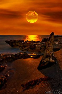 Glorious Moonrise over rocks and driftwood on Hutchinson Island, Florida