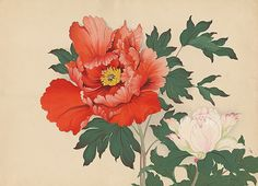 Color reference for orange/red peony color. Gradations in the actual petals would be nice too!