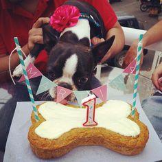 """""""Martina cumplió su primer año de vida y celebró feliz junto a sus humanos y amigos de 4 patas!  Deseamos que celebres muchos, muchos más! …"""""""