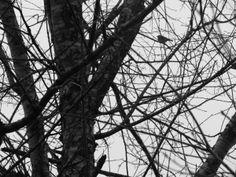 Birdie Bird by Angela R. Watts