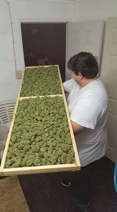 Looking to start a career in cannabis? Get certified at the premier cannabis certification program! Cannabis Training University is the most affordable and informative cannabis college in the world. Learn how to grow weed from cannabis cup winning growers. Anyone can enroll from anywhere. Learn on your own schedule, any time, day or night. No prior experience or education required. The leading marijuana school is CTU! Over 100 cannabis videos, and 50 cannabis e-books.  www.thectu.com