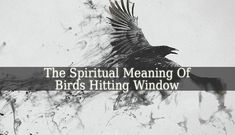 The Spiritual Meaning Of Birds Hitting Window is more complex. Most of us were raised knowing that this phenomenon is an omen. We can see it in movies also.