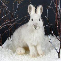 bunny / Snowshoe hare....Amazing !!