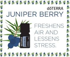 juniper-berry-essential-oil-doterra-international-kellys-essential-oils