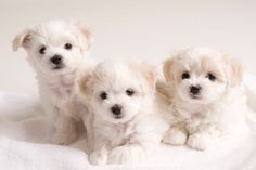 It can be truly hard to discover the most unique puppy names, yet we are below to help your search end with a name that will fit your pet perfectly.Great Unique Puppy Names for your furry friend. Pick the best name like Lilith, Sonic, Lottie, Tilly, Ferry, Ziva, Finn, Shadow, Spark, Buddy! #UniquePuppyNames #PuppyNames