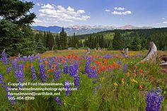 Mountain Wildflower View from Shrine Pass, Near Vail and Breckenridge, Colorado A Perfect Day, Wild Flowers, Paths, Bloom, Mountains, Tall Grasses, Clean Fragrance, Breckenridge Colorado, Crickets