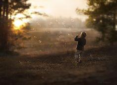 Фотография The end of sunny day автор Elena Shumilova на 500px