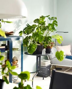 Update your living room with groups of plants! Put one on a side table for a fresh feel. IKEA offers a lot of tables, such as LÄCKÖ grey table. It's traditional, organic wrought-iron shapes were inspired by the branches of an apple tree. Ikea Living Room, Living Room Furniture, Living Rooms, Glass Cabinet Doors, Glass Door, Iron Furniture, Led Floor Lamp, Cozy Living, Glass Panels