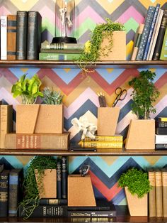wallpaper on bookshelf + plants